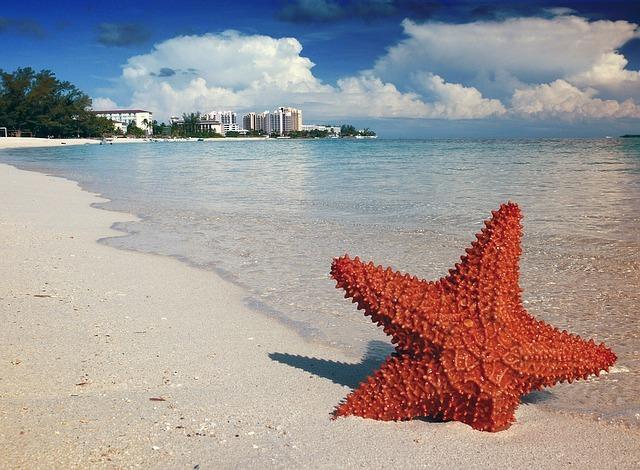 Etoile de mer, Bahamas