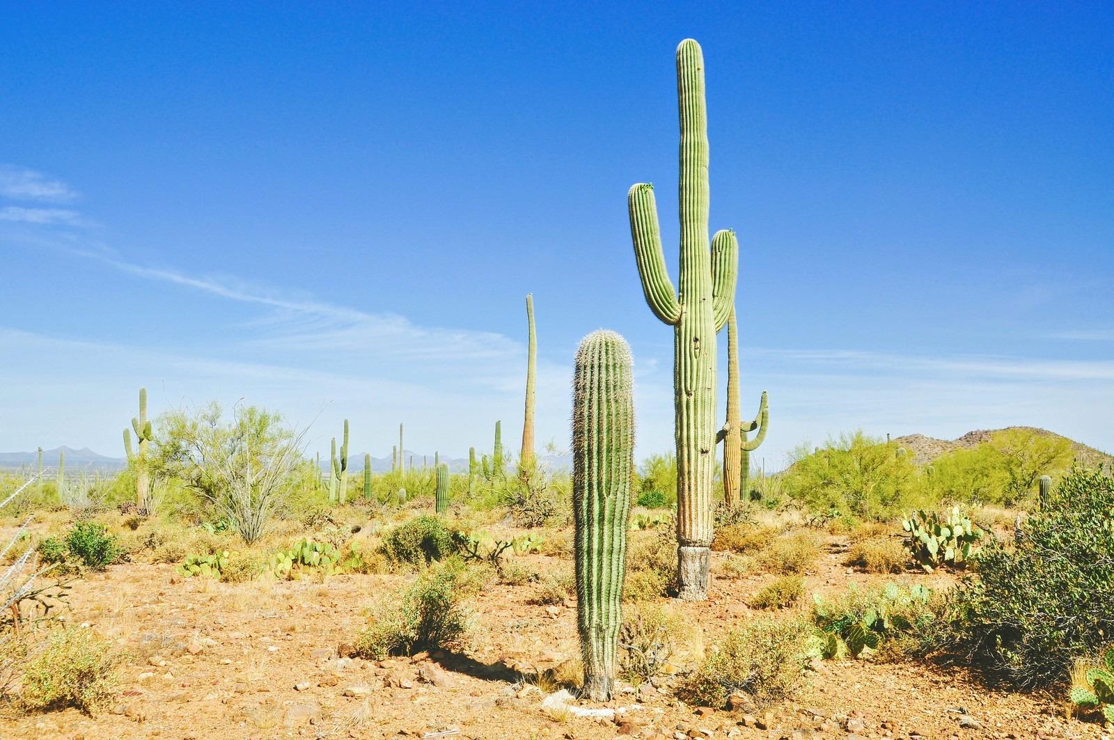 désert et cactus