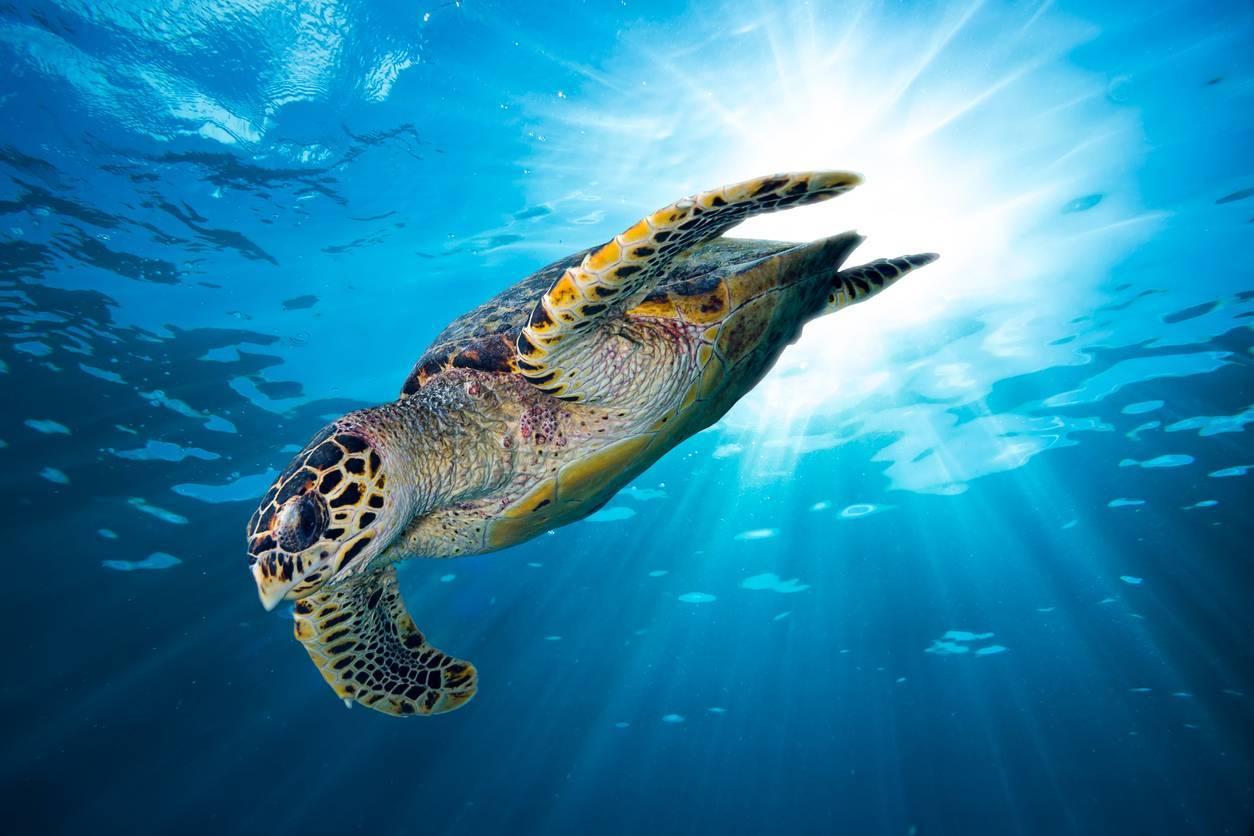 Seychelles tortues