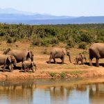 Eléphant lors d'un safari
